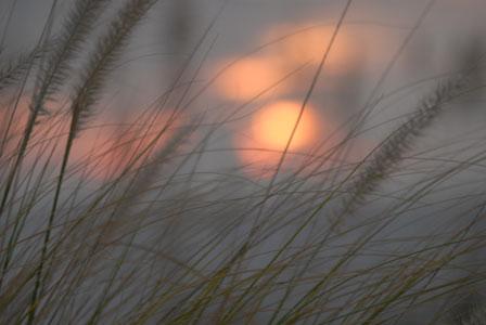 Sunset777_808_forblog