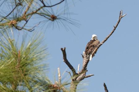 Eagle01
