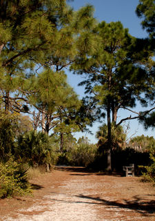 Nature Trail at Honeymoon Island
